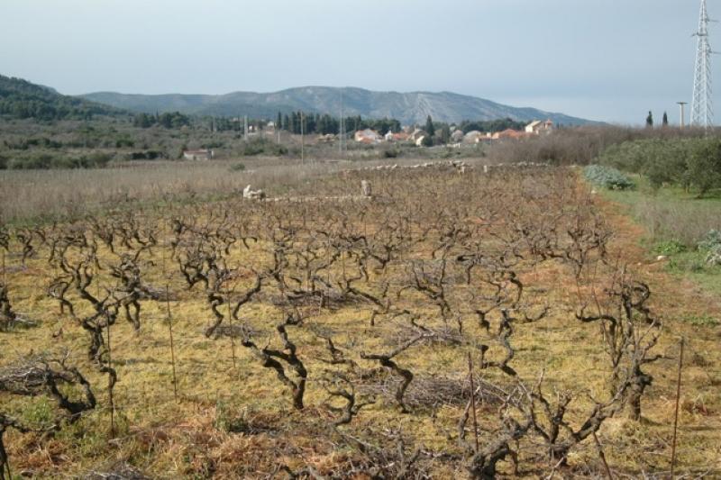 Herbicide in the Stari Grad Plain, March 2016, by Vivian Grisogona